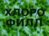 Хлотофилл купить Украина