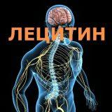 Лецитин капсулы и порошок
